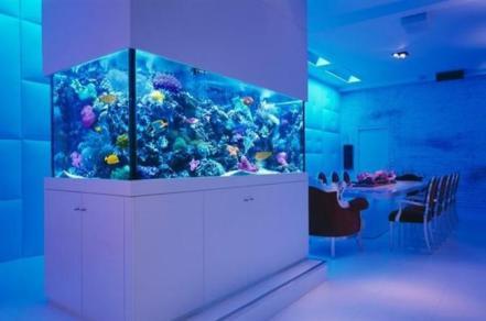 Colorfull-berkat-akuarium